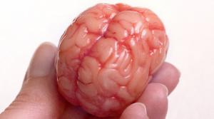 A neuroscientist explains how religious fundamentalism hijacks the brain (rawstory.com)