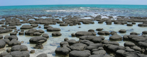 Stromatolites: Earth's Most Ancient Life Forms Have Just Been Discovered Alive in Tasmania (newsweek.com)