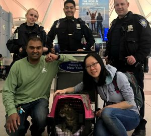 Cops catch Pepper, Kennedy Airport escapee cat, after owner's pal calls out feline's Mandarin name