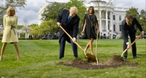 Trump and Macron planted a tree — but where did it go? The mystery has been solved!
