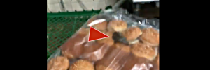 Ewww! Burger King Video Shows Mice Racing on Sesame Buns; Rodent Droppings Found