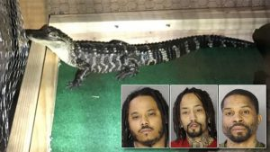 Pennsylvania drug bust seizes crack, heroin — and alligator (nydailynews.com)